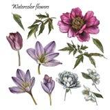 Kwiaty ustawiający akwareli peonia, wzrastali, tulipan, jaśminów kwiaty royalty ilustracja