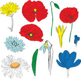 kwiaty ustawiający wiosna Fotografia Royalty Free