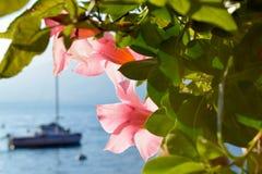 Kwiaty Varenna Fotografia Royalty Free