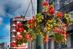 Kwiaty, Vigo, Hiszpania Obrazy Royalty Free