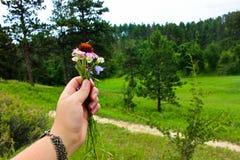 Kwiaty w łące obrazy stock