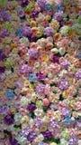 Kwiaty w ścianie z ładnym kolorem i oświetleniem z zmrokiem i l Zdjęcia Stock