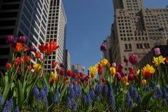 Śródmieście z kwiatami Fotografia Stock