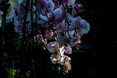 Kwiaty w świetle słonecznym Obrazy Stock