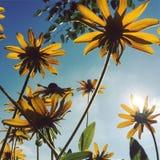 Kwiaty w świetle słonecznym Fotografia Royalty Free