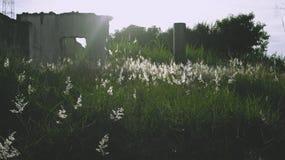 Kwiaty w świetle słonecznym pięknym zdjęcie royalty free
