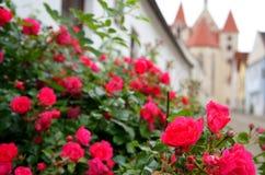 Kwiaty w Austria Obraz Royalty Free