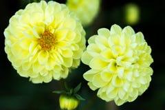 Kwiaty w beatuful kolorów zamknięty up Fotografia Royalty Free
