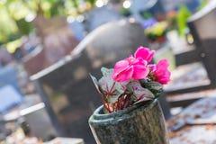 Kwiaty w cmentarzu z nagrobkami w tle Obrazy Royalty Free