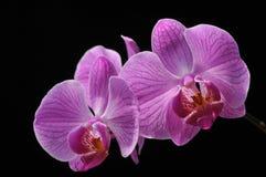 Kwiaty w czarnej scenie Zdjęcie Stock