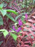 Kwiaty w dżungli fotografia royalty free