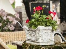 Kwiaty w długim garnku Fotografia Royalty Free