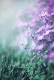 Kwiaty w deszczu Fotografia Stock