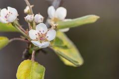 Kwiaty w drzewie Zdjęcie Stock