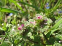 Kwiaty w dzikim Zdjęcie Royalty Free