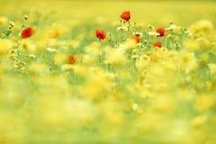 Kwiaty w dzikim lata polu Fotografia Royalty Free