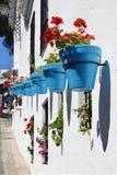 Kwiaty w flowerpot na ścianie Obrazy Royalty Free