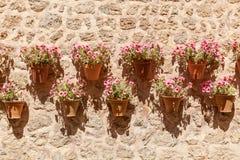 Kwiaty w flowerpots Zdjęcia Royalty Free