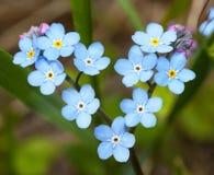 Kwiaty w formie serce. Zdjęcia Royalty Free