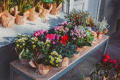 Kwiaty w garnkach outside Zdjęcia Stock
