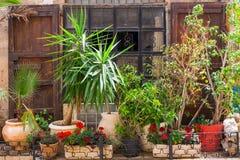 Kwiaty w Jaffa zdjęcie stock