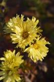 Kwiaty w jesień Zdjęcia Royalty Free