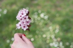 Kwiaty w kobiety ręce Obraz Royalty Free
