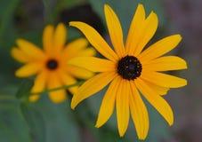 Kwiaty w królewiątka ` s jarda Morskim parku w Amherstburg, Ontario obraz royalty free
