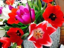 Kwiaty w kwiacie Zdjęcia Royalty Free