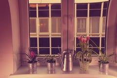 Kwiaty w kwiatów garnkach i podlewanie puszce na nadokiennym wypuscie Tillandsia tulipany i kwiat Dodaje HDR skutek obrazy royalty free
