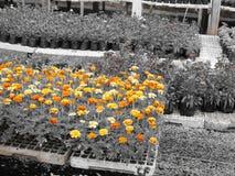 Kwiaty w kwiat zdjęcie royalty free