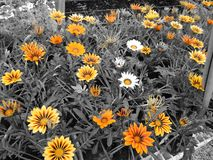 Kwiaty w kwiat zdjęcia stock