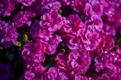 Kwiaty w kwiatu łóżku Ornamentacyjny Ogród Obraz Royalty Free