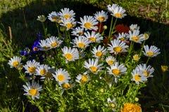 Kwiaty w kwiatu łóżku Ornamentacyjny Ogród Fotografia Royalty Free