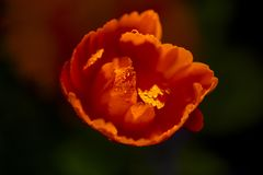 Kwiaty w kwiatu łóżku Ornamentacyjny Ogród Obrazy Royalty Free