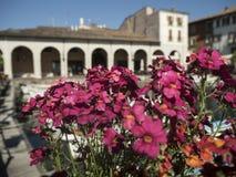 Kwiaty w Lago Di Garda Zdjęcie Royalty Free