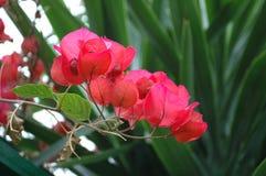Kwiaty w lato czasie zdjęcia royalty free