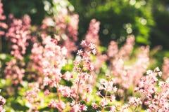 Kwiaty w lato nocy Fotografia Stock