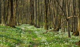 Kwiaty w lesie Zdjęcia Stock