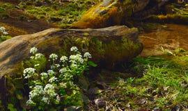 Kwiaty w lesie Zdjęcie Stock