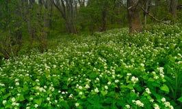 Kwiaty w lesie Obrazy Stock