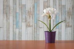 Kwiaty w małych garnkach na stole Obraz Royalty Free