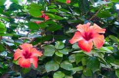 Kwiaty w Madryt obrazy stock