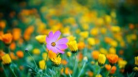 Kwiaty w MUAR i świetle słonecznym Obraz Stock