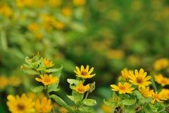 Kwiaty w naturze na zielonym tle obraz royalty free