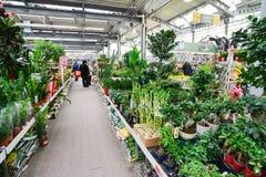 Kwiaty w OBI sklepie Moskwa Rosja Y Zdjęcia Stock