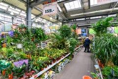 Kwiaty w OBI sklepie Moskwa Rosja Y Obraz Stock