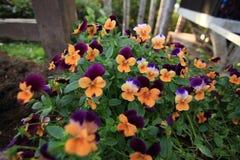 Kwiaty w ogródzie Fotografia Royalty Free
