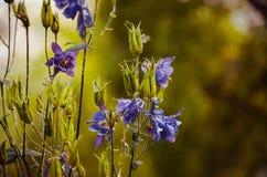 Kwiaty w ogródzie Obraz Stock