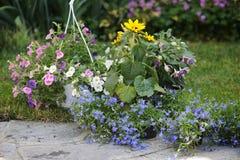 Kwiaty w ogródzie Zdjęcia Stock